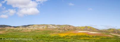 Carrizo Plain #6