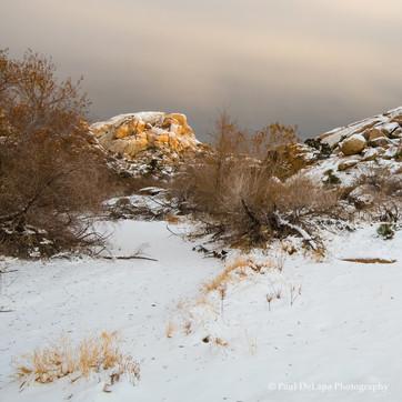 Joshua Snow-Tree #13