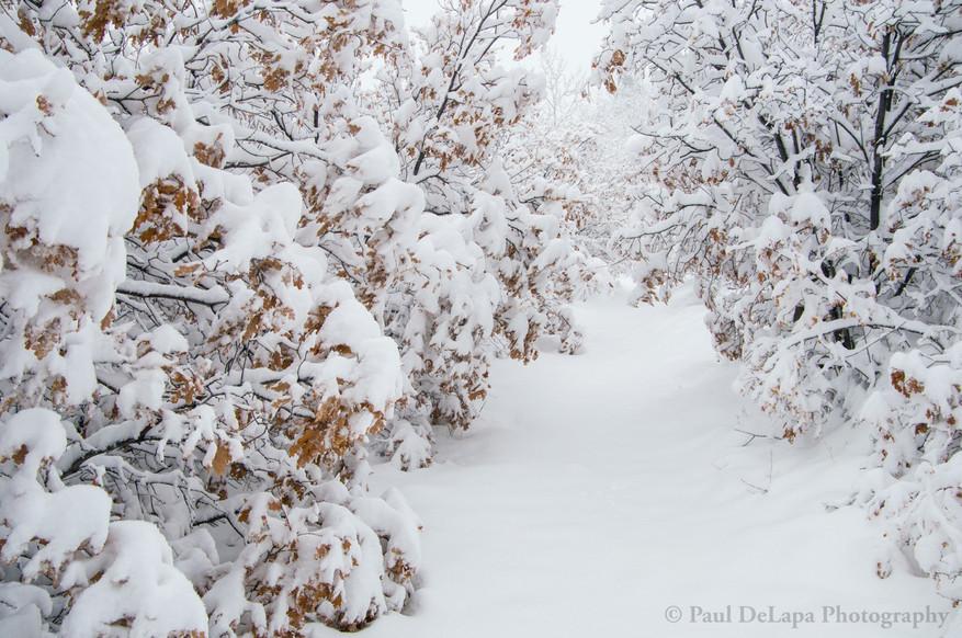 Snow #19