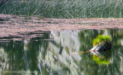 Olaine Lake #7