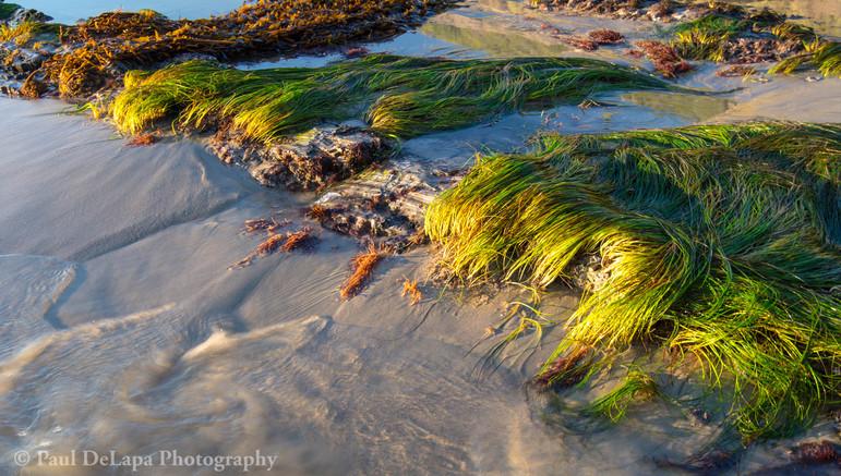 Bates Beach #17