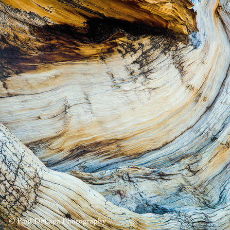 Wood #8