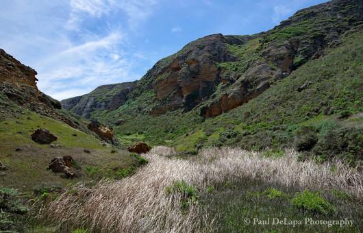 Lobo Canyon #13