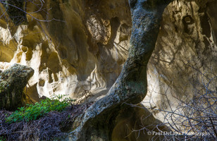Salisbury Canyon #10