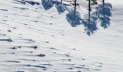 Snow #15