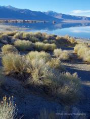 Mono Lake #12