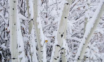 Snow #17