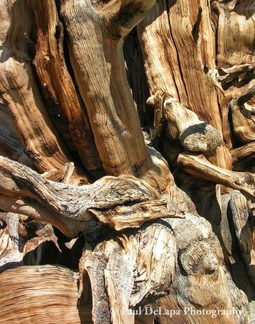 Wood #12