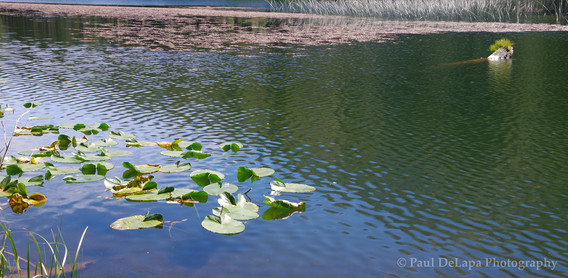 Olaine Lake #10