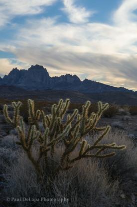 Mohave Desert #10