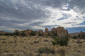 Mohave Desert #13