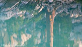 Big Pine Creek #11