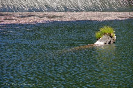Olaine Lake #3
