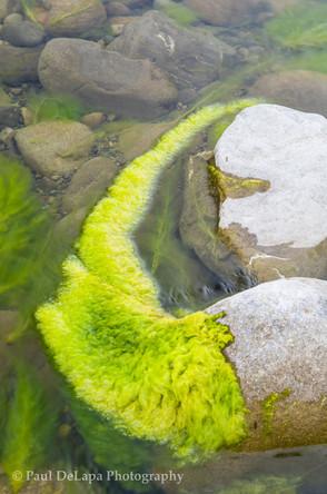 River Moss #12