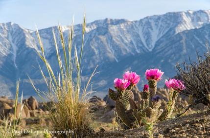 Cactus #15