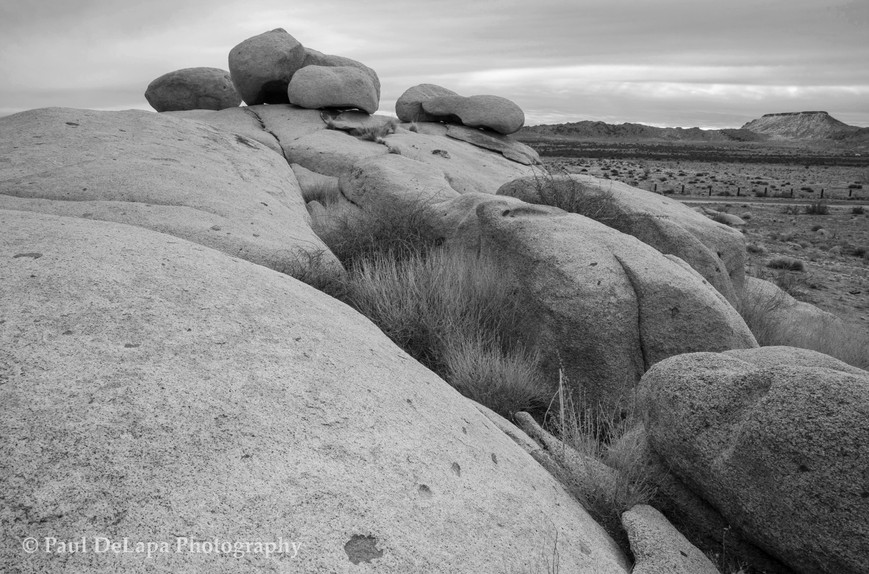 Mohave bw #14