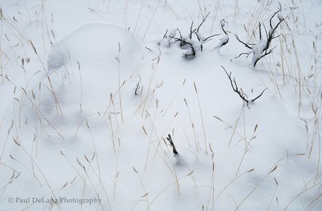 Snow #5