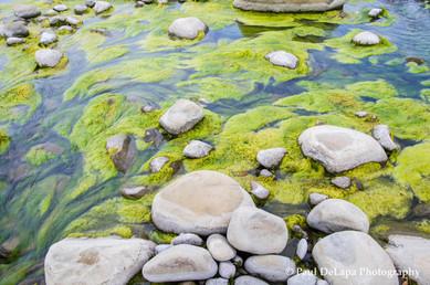 River Moss #4