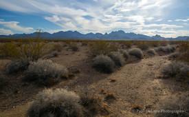 Mohave Desert #11