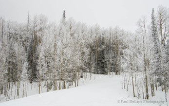 Winter #11