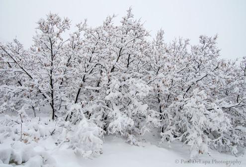 Snow #12