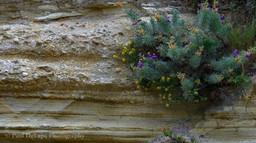 Water Canyon #11