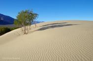 Mesquite Dunes #1