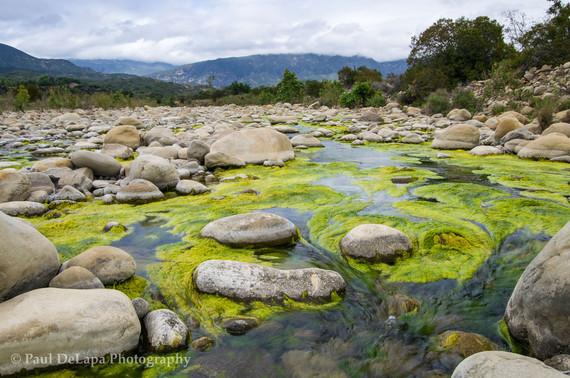 River Moss #3