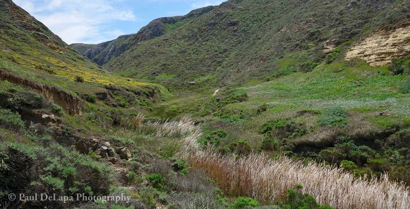 Lobo Canyon #6