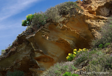 Lobo Canyon #14