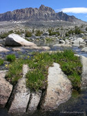 Humphreys Basin #9