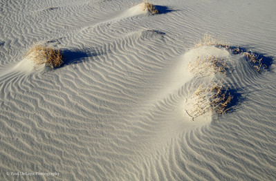 Mesquite Dunes #6