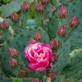 Cactus #9