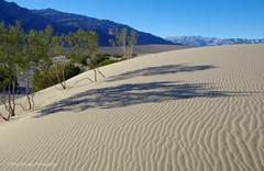 Mesquite Dunes #10