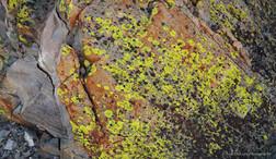 Lichen #7