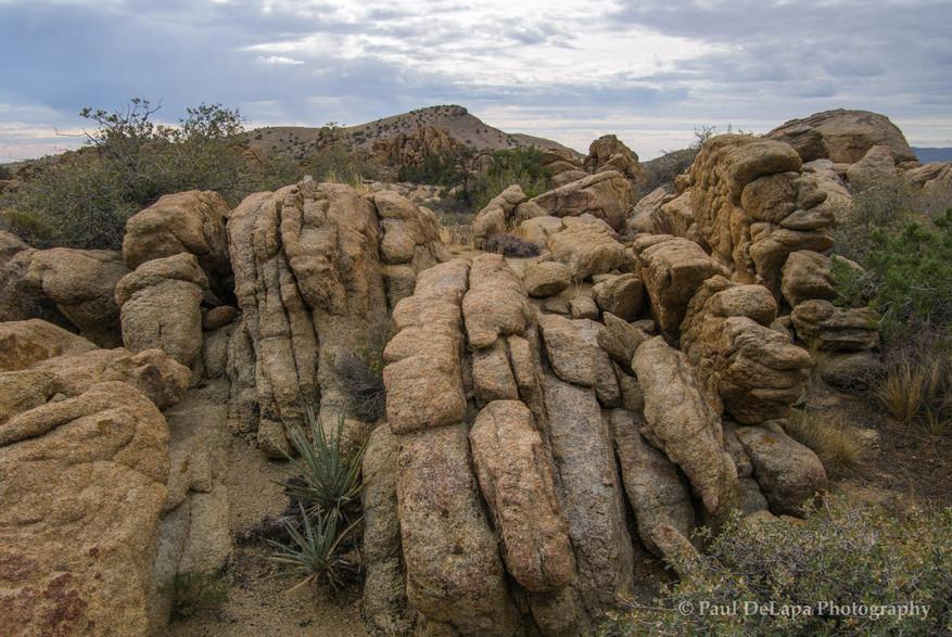 Mohave Desert #19