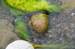 River Moss #9