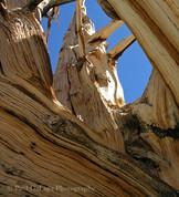 Wood #10