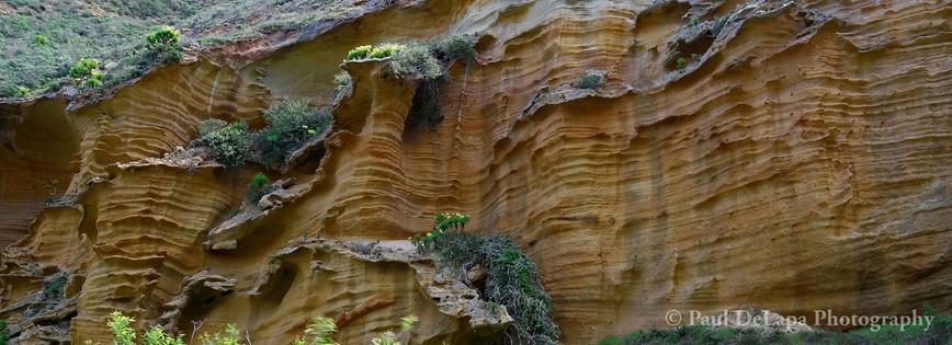 Lobo Canyon #16