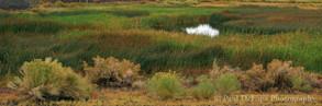 Mono Lake #9