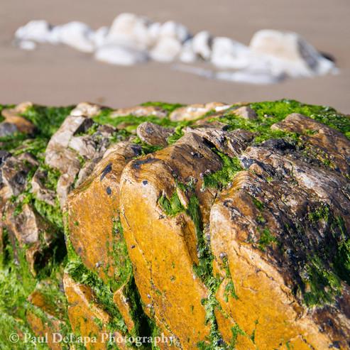 Bates Beach #11