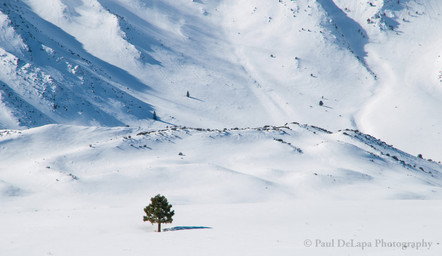 Snow #18