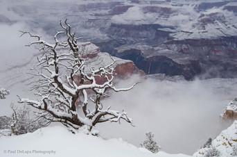 Grand Snow-Canyon #21