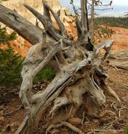 Bryce Canyon #16