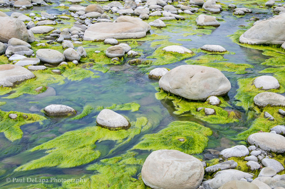 River Moss #15