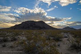 Mohave Desert #12
