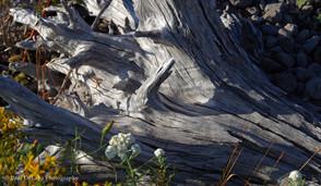 Mt St Helens #7