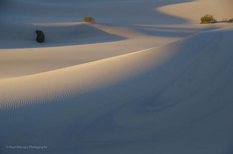 Mesquite Dunes #3