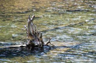 Ediza Lake #4