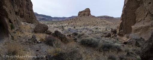 Mohave Desert #17